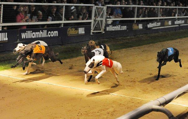 The Greyhound Derby