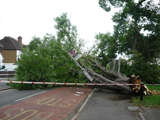 Cheam Common Road is blocked by tree. Picture by Worcester Park Info