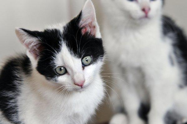 Kittens left with Sutton animal charity