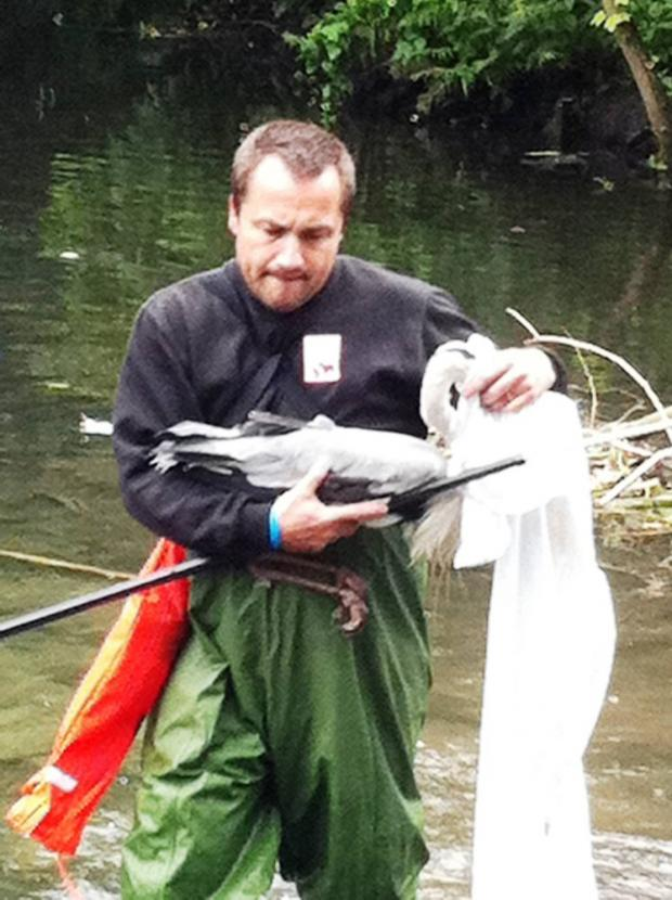 The injured heron was rescued from the lake in Beddington Park