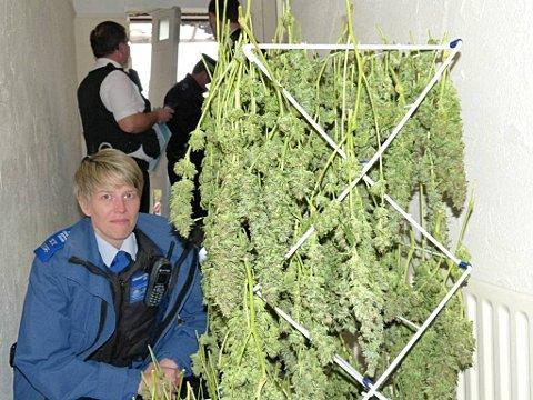 Police in Hackbridge uncover 40 plant cannabis factory