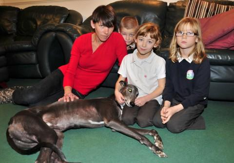 Greyhound, Ruthy, badly injured after falling on glass in Fairlands park in North Cheam