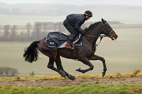 Warming up: Sprinter Sacre struts his stuff in Lambourn on Wednesday