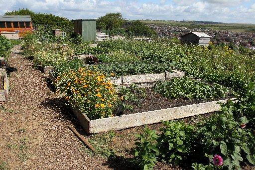 Stock image: An allotment
