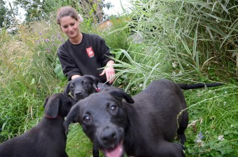 Some of the puppies rescued by the Riverside Animal Centre