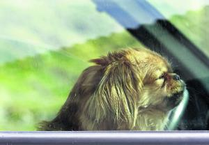 Sutton Guardian: 7 of the lamest excuses given for dogs left in hot cars - and harrowing account of what can happen