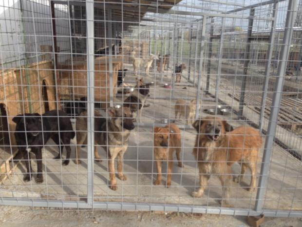 The Romanian dogs waiting to travel to the UK after living in