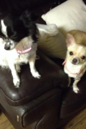 Missing: Izzy and Rozie escaped on Wednesday night