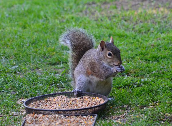 A man gloated he had killed a squirrel in Manor Park