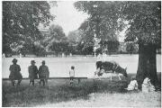 What a sight: A lone cow enjoys a cricket match on Ham Common to pass the time back in the day