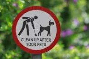 Dog poo, Darcey Bussell, litter morons, BackZac and Stone Roses - just 5 Thoughts