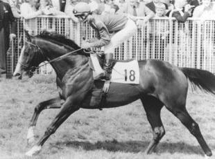 Sutton Guardian: MISSING: Shergar was kidnapped in 1983